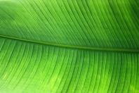 medium-green1