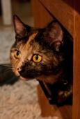 Michiel's cat, Poes